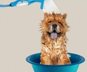 Pet Hose and Brush For Pets