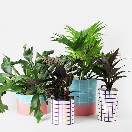 PAPER COVER POTS / THE SQUARED - L