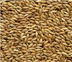 AVIGRAIN CANARY SEED 1KG