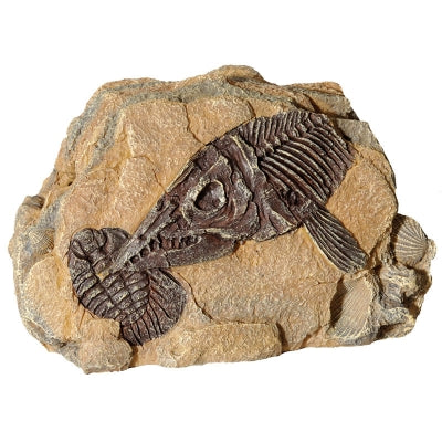 REPTILE ONE ORNAMENT FOSSIL ICHTHYOSAUR ROCK