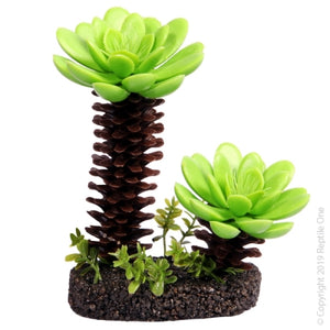 REPTILE ONE SUCCULENT TREE WITH SAND BASE MEDIUM