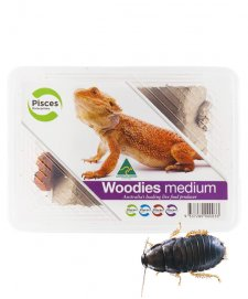 PISCES WOODIES MEDIUM TUB