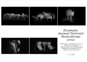 Printed Cards - Dramatic Animal Portraits - Monochrome (L)