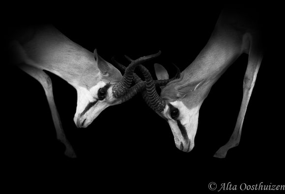 Dominance - Dramatic Animal Portraits