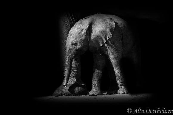 Little Giant - Dramatic Animal Portraits