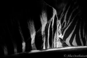 Contemplating - Dramatic Animal Portraits