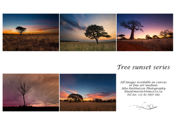 Printed Cards - Tree Sunset