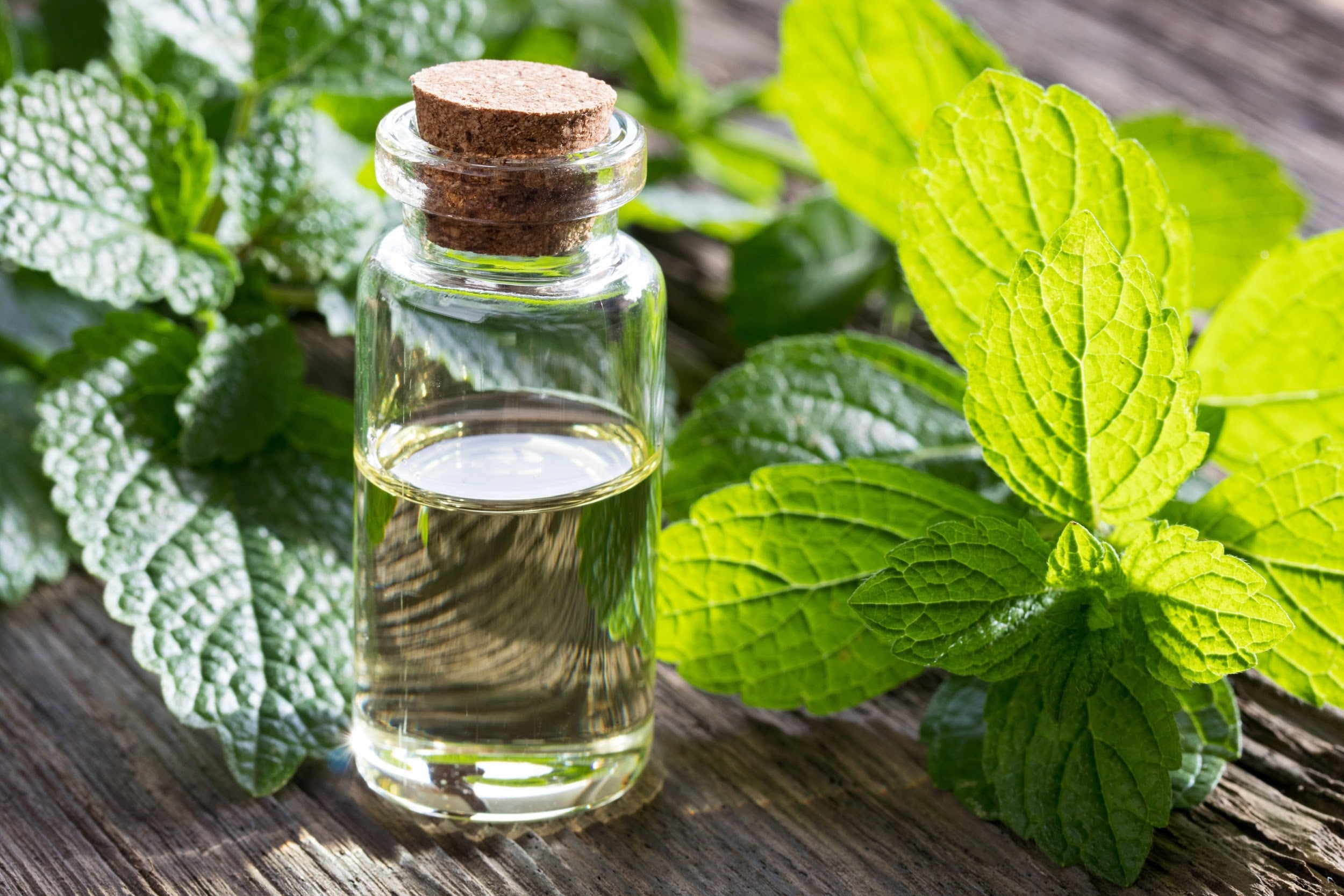 Lemon Balm to relieve stress