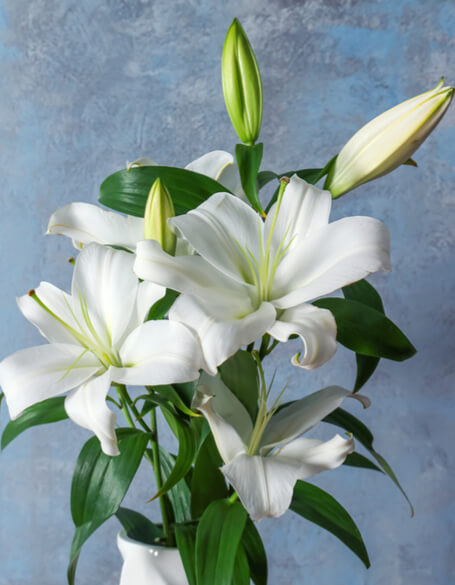 Same day flower delivery Toronto – Toronto flowers gifts - Lily Gifts