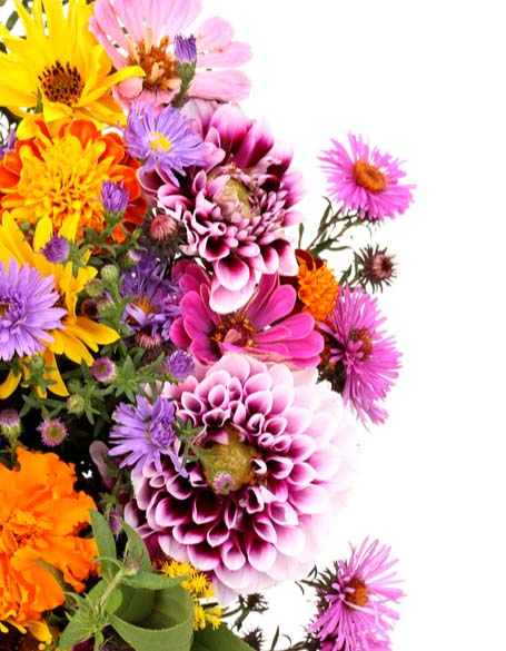 Same day flower delivery Toronto – Toronto flowers gifts -New Year Flower Gifts