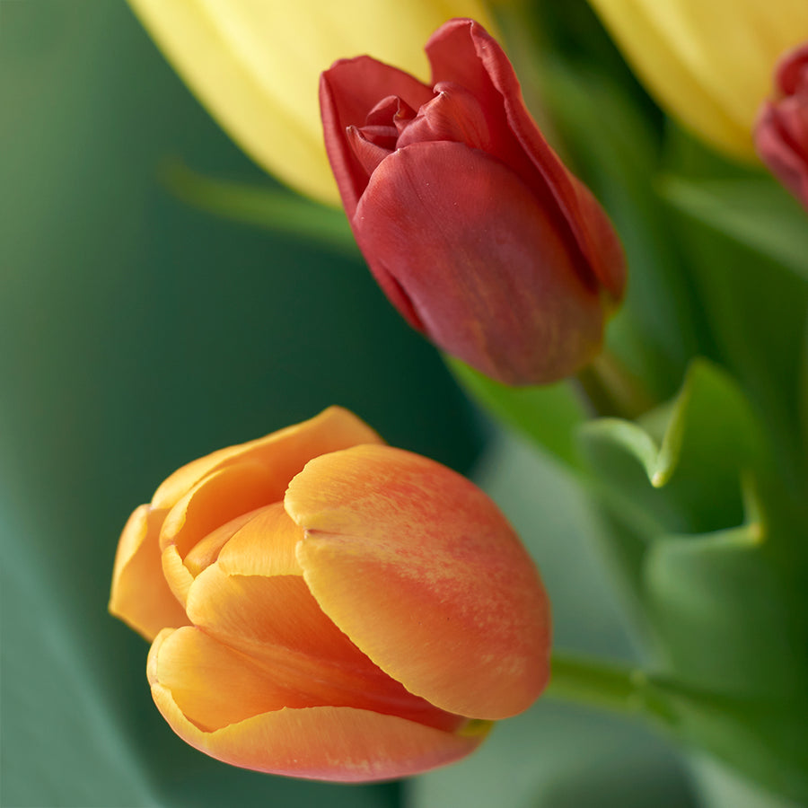 Country Garden Tulip Bouquet