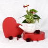 Valentine's Day Planted With Love Anthurium