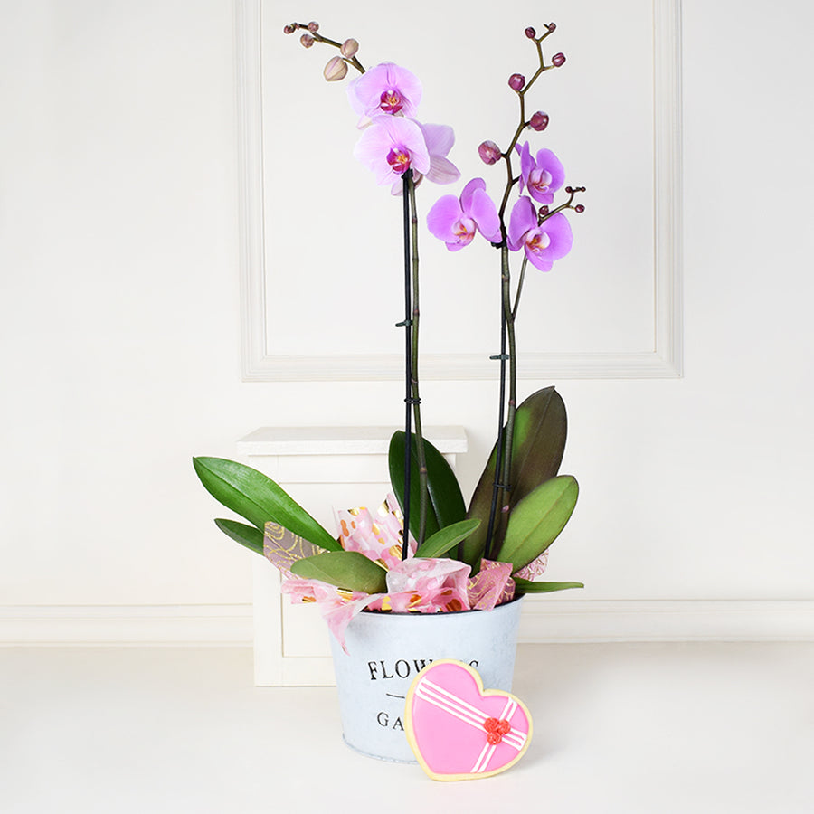 Valentine's Day Orchids Gift Basket