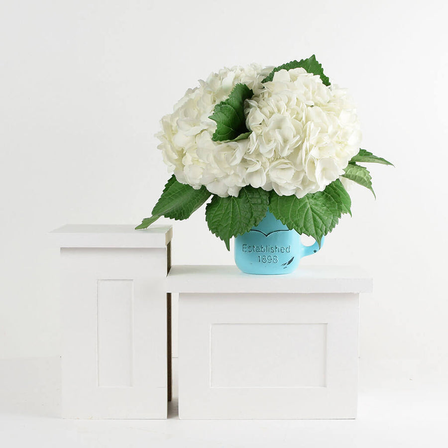 Fresh White Hydrangeas