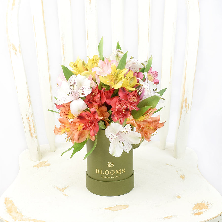 Livewire Lilies Flower Gift