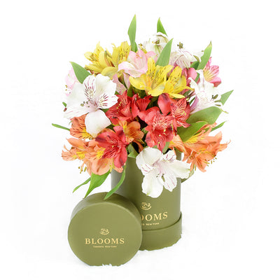 Livewire Lilies Flower Gift & Chocolates