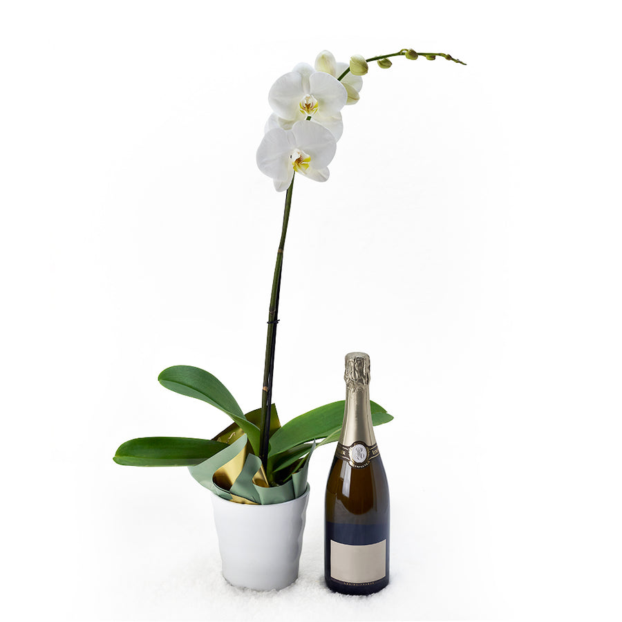 White potted orchid with a bottle of sparkling wine. Same Day Toronto Delivery