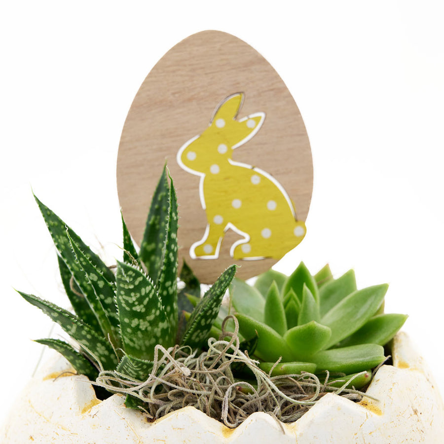 Succulent Easter Egg arrangement. Same Day Toronto Delivery