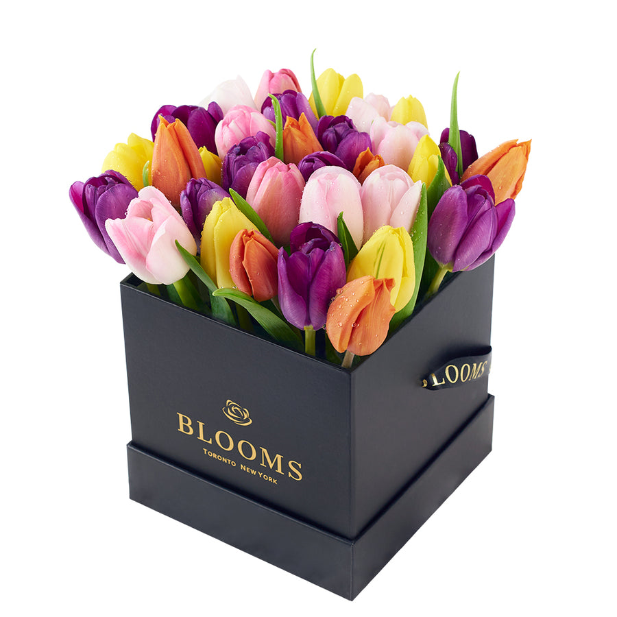 Multi-coloured tulip arrangement. Same Day Toronto Delivery.