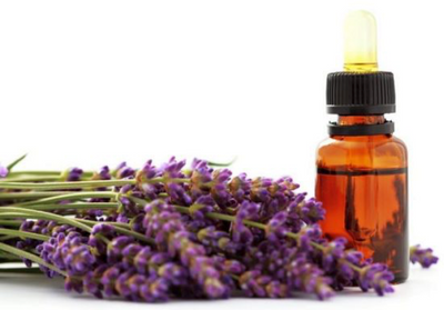 Why is Lavender so popular?