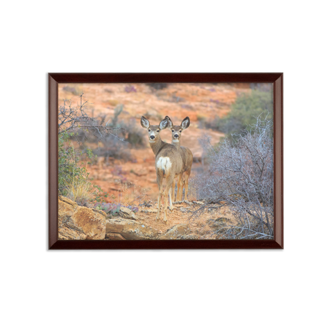 Arizona Mule Deer Wall Plaque
