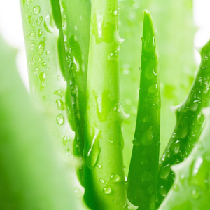 Aloe Vera: 6 Underestimated Benefits for Dry Natural Hair