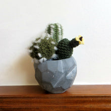 Three Cacti in a Grey Pot