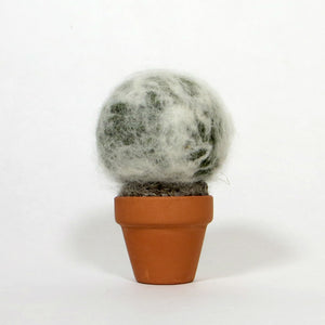 "Mini Round Cactus (4"" Tall) - Myra"