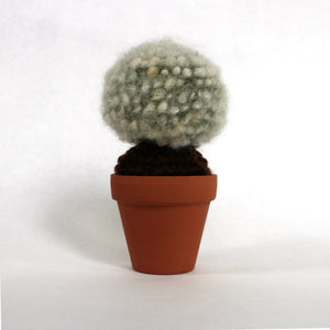 Green Spherical Fluffy Cactus