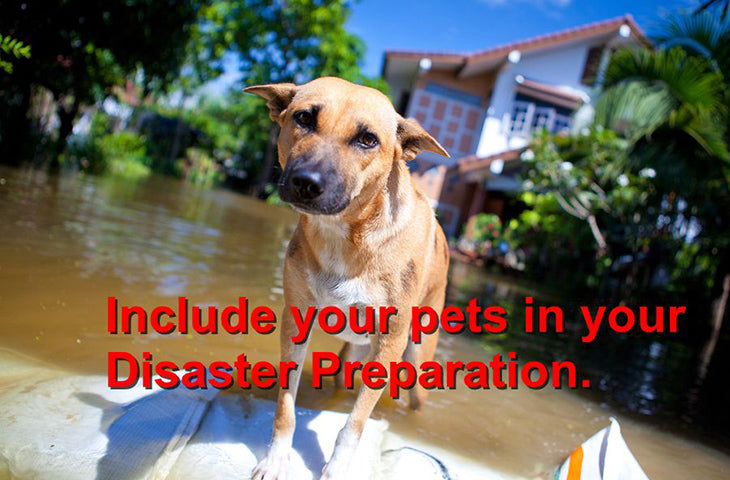 Keeping your pet safe from disasters