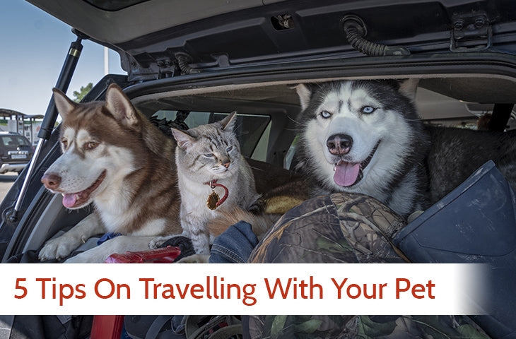 How to travel easy with your pets