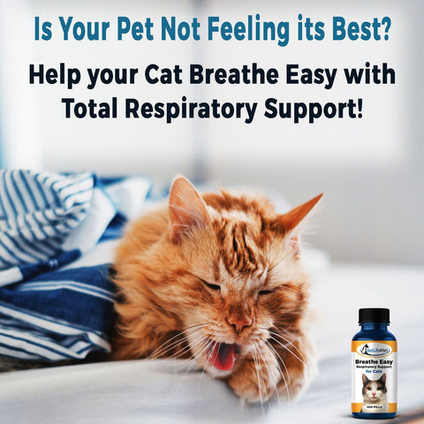 Image of Breathe Easy Respiratory Support for Cats - Eases Cough, Runny Nose and Cat Flu - (450 pills)