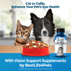 Eye Care & Vision Support Feline Eye-Infection Relief Remedy