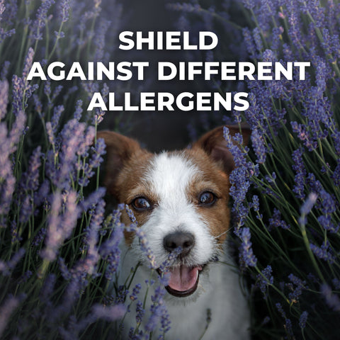 Allergy Relief for Dogs