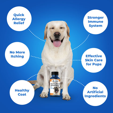 Image of Skin Treatment for Dogs