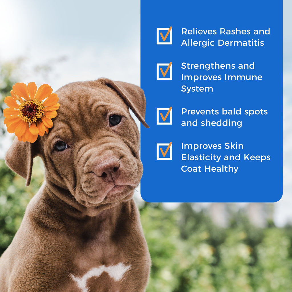 Rashes Relief for Dogs