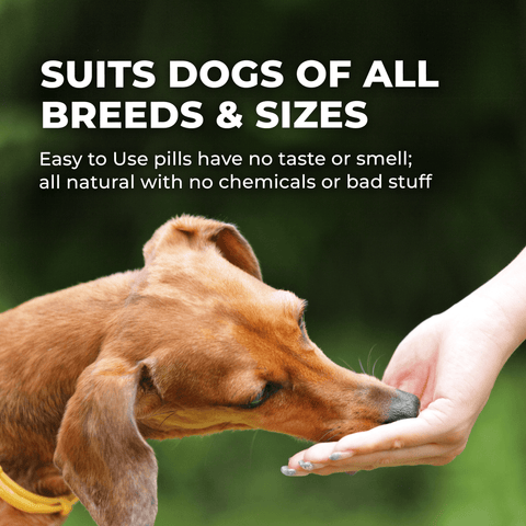Natural Skin Vitamins for Dogs