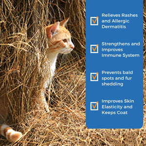 Dry Skin Relief for Cats