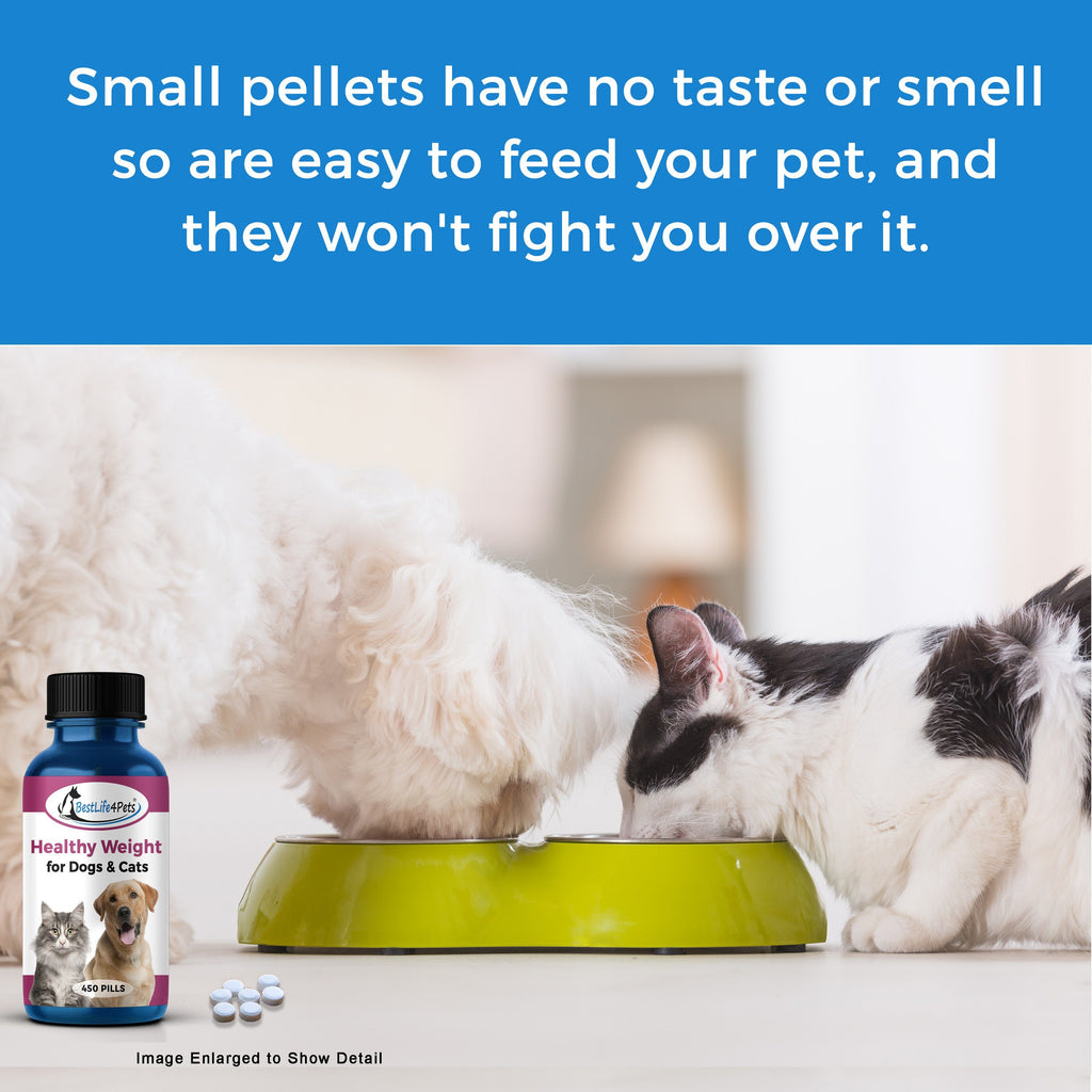 Weight Loss Supplement for Cats