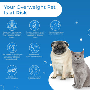 Weight Loss Supplement for Dogs