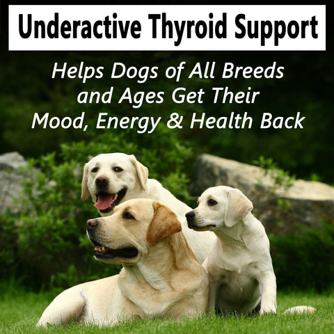 Hypo-Balance Thyroid Support for Dogs - (450 pills)