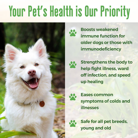 Immunity Boost for Dogs - Helps Protect Against Kennel Cough, Dog Flu and Infection - 450 Pills