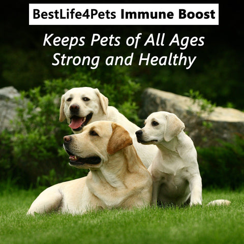 Image of Immunity Boost for Dogs - 450 Pills