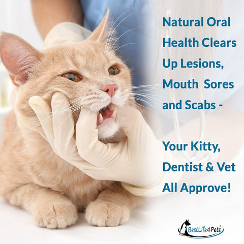 Gingivitis Treatment for Cats