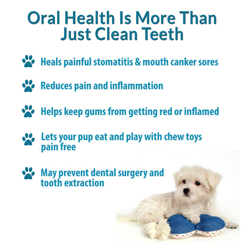 Image of Dog Dental Care
