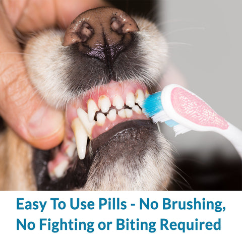 Natural Oral Solution for Dogs
