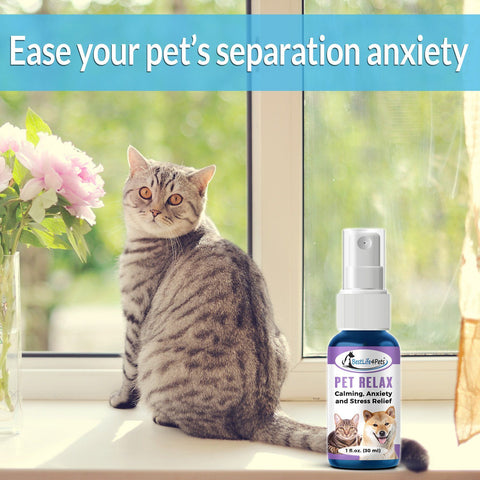Image of Separation Anxiety Relief Spray for Pets
