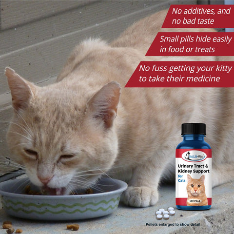 Image of Cat Urinary Tract Infection Medicine