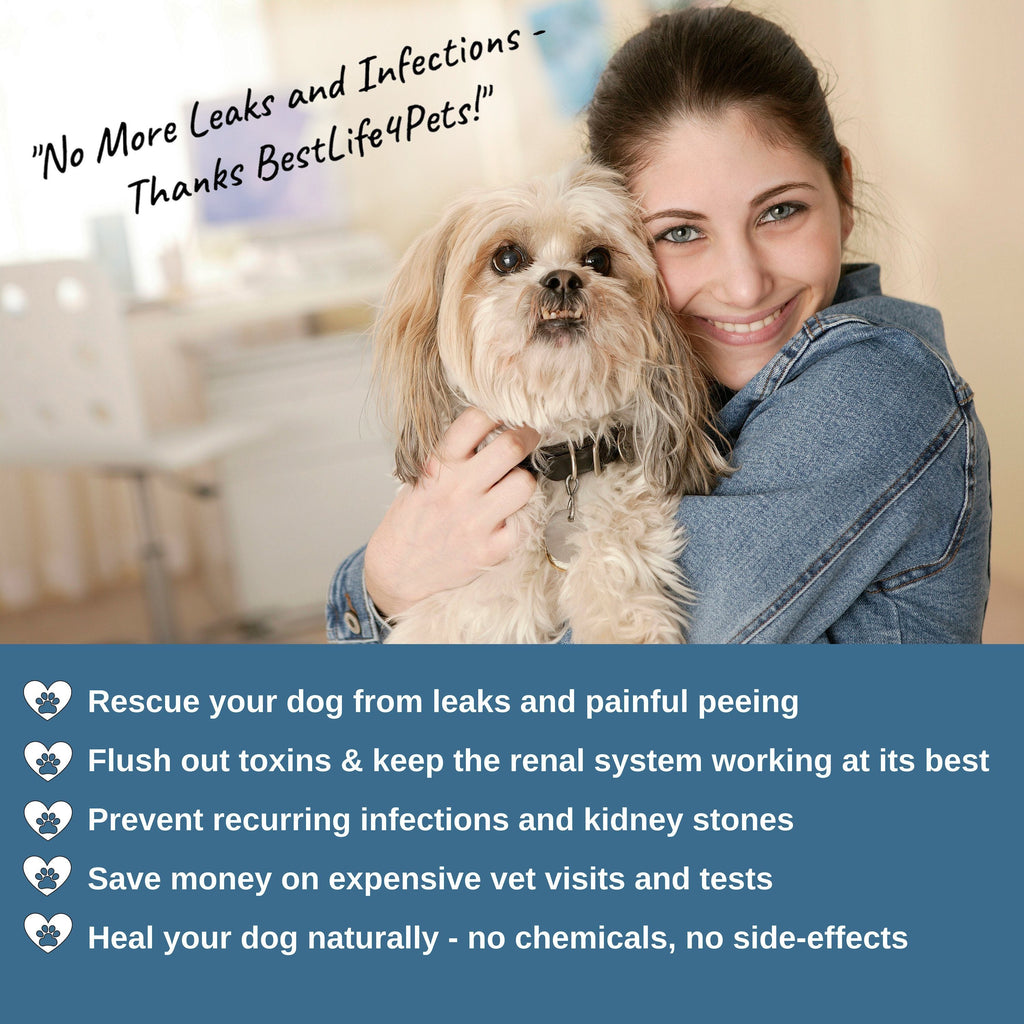 Dog UTI Remedy