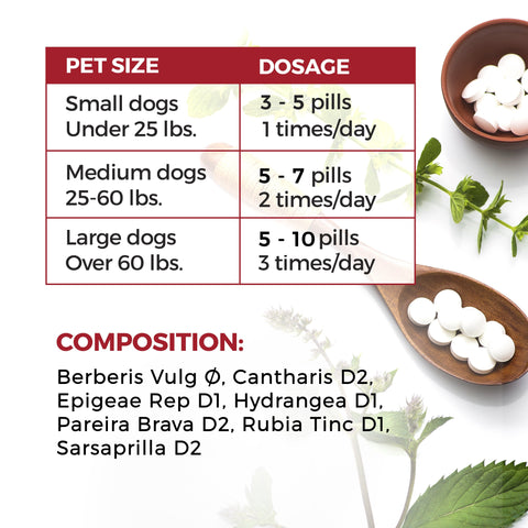 Image of UTI Medicine for Dogs